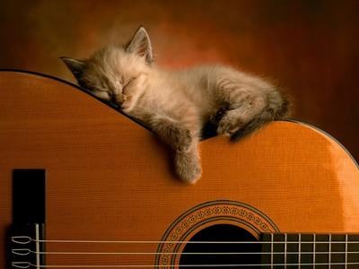 normal-chat-en-train-de-dormir-sur-une-guitare.jpg